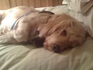 Our deceased dog, Scruffy.