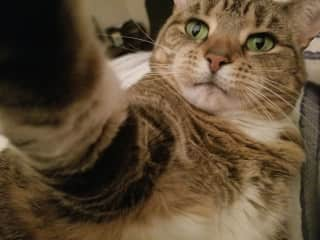 My 9-year-old rescue cat, Gaea, taking a selfie!