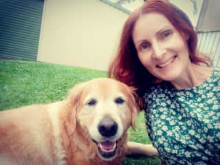 Sheba, golden retriever _Pet/house sit Lota QLD Feb 2021