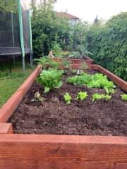 Raised vegetable garden for easy tending