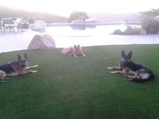 Duke, Goober and Loki in Poway, CA.  My Gooer (2001-2016)