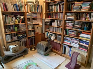 Library/'cat's room'