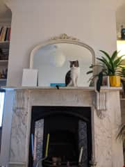 We are relaxed about him getting up on the mantlepiece!