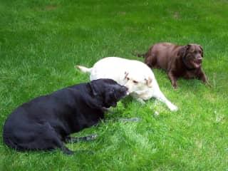 Bagherra, Pearl and Gracie