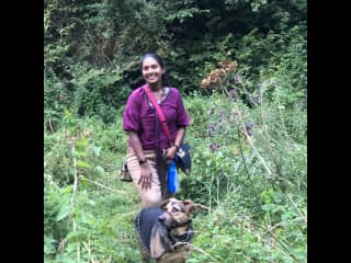 We have good experience in dog-walking, even in stimulating environments