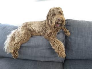 Mabel - Third dog sit