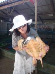 BALI sea turtle sanctuary 2013