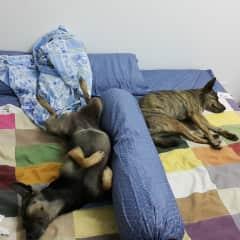 Ebony and MJ hogging my bed! :)