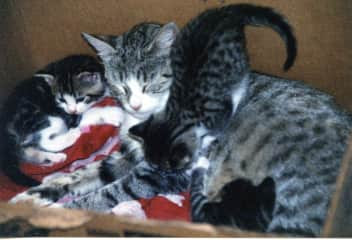 Missy and her five kittens