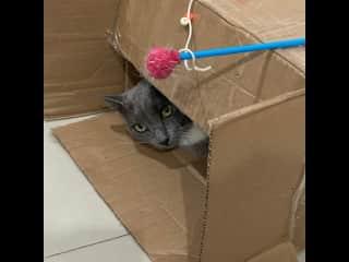 She loves cardboard boxes!