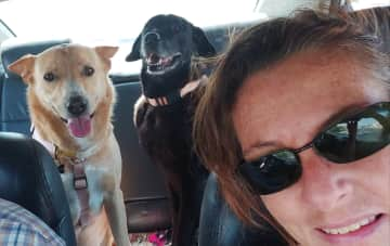 Driving with our dogs Ras & Duna