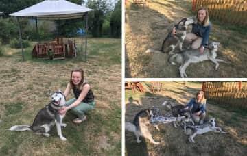 Our Husky family
