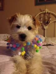 My best friend's pooch!