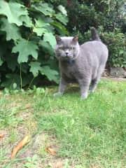 Henry exploring the garden