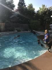 Doggie swim play date!
