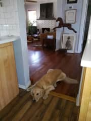 Jessie begging for food