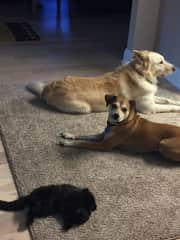 Auttie, Milo and Wali