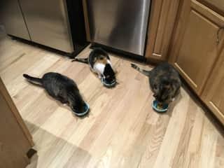 My 3 girls having breakfast ❤️
