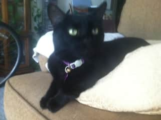 This is Ebony, a laid-back cat who enjoys sharing the sofa.