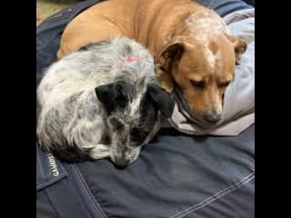 Sadie and Sammy snuggling on their big bean bag turned dog bed, super comfy