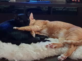 Ginger and Astaire