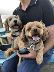 Ted and Benson, our pet sit in Cumbalum, New South Wales