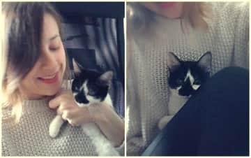 Hada, my 1st foster kitten
