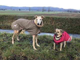Uma and Lucy need their coats when it is cold or raining