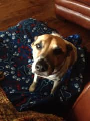 My step dog Barkley ♥️