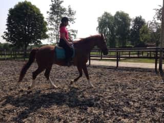 Bitless horseriding
