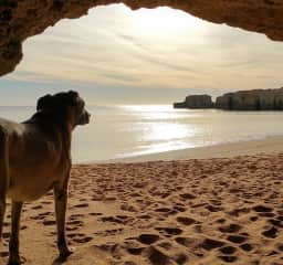 Portugal housesitting: Atrius standing guard during one of our twice daily beach walks during another Portugal house sit