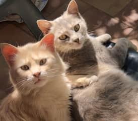 My Italian cats!!