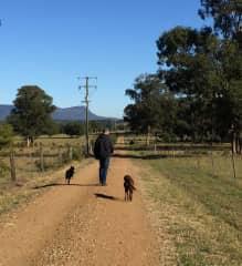 The joy of walking dogs!