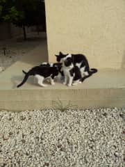 Clint and family: stray cats who adopted us in Cyprus and let us use their house and garden.