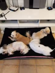 Sassy, Titch, Daisy and jack