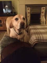 Hi I'm Max and I just want to be loved - I am a rescue dog