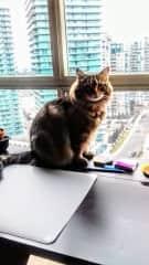 Marcus, Gentleman Condo Cat, 2018