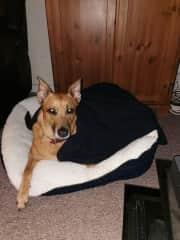 Nikita in her bed