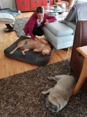 Marta, Coco and Lennie during housesitting in Coquitlam, Canada ❤