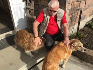 Les with 2 of the dogs we Housesat in 2019 along with cats & horses