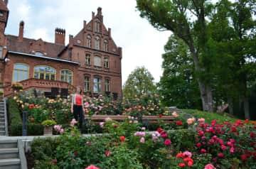 Austen admiring the roses in Tukums, Latvia