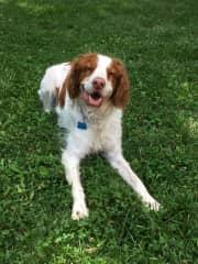 Turner (My puppy in Minnesota!)