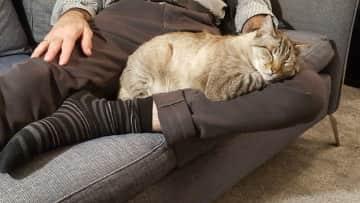 Blanca, our lap cat