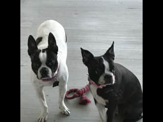 Penny & Lucy - Sacramento, California