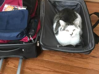 Where are you going without me?
