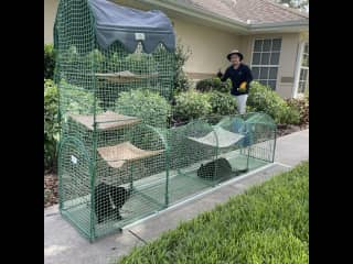 Gardening while kittens play...