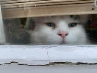 Maisy peeking out at us.