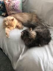 Leo & Sally