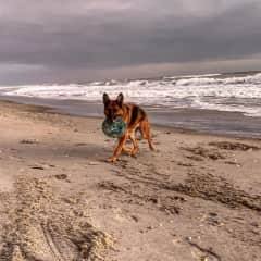 Maddie loves to chase frizbees on the beach!