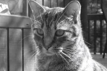 Mimi when she got older, so regal:)
